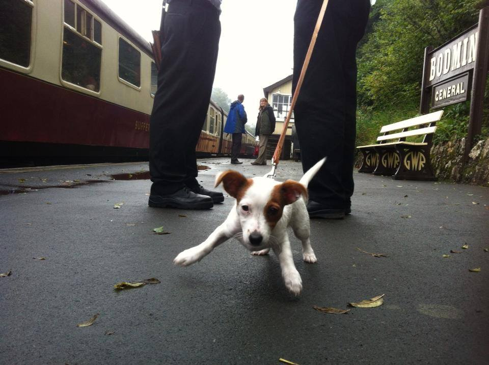 A young puppy is excited on the station platform at Bodmin general Station. The Railway is one of seven dog friendly attractions in Bodmin